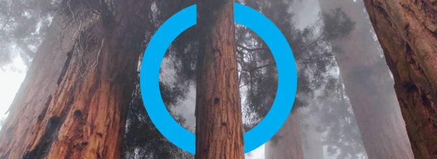 riforestazione pianeta ayming treedom