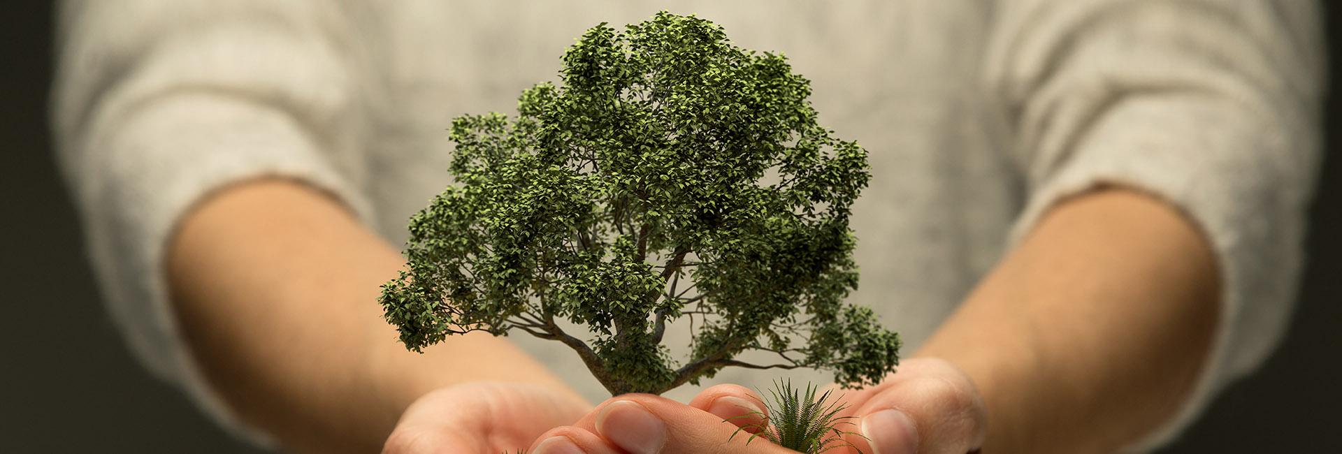 Hände halten Baum